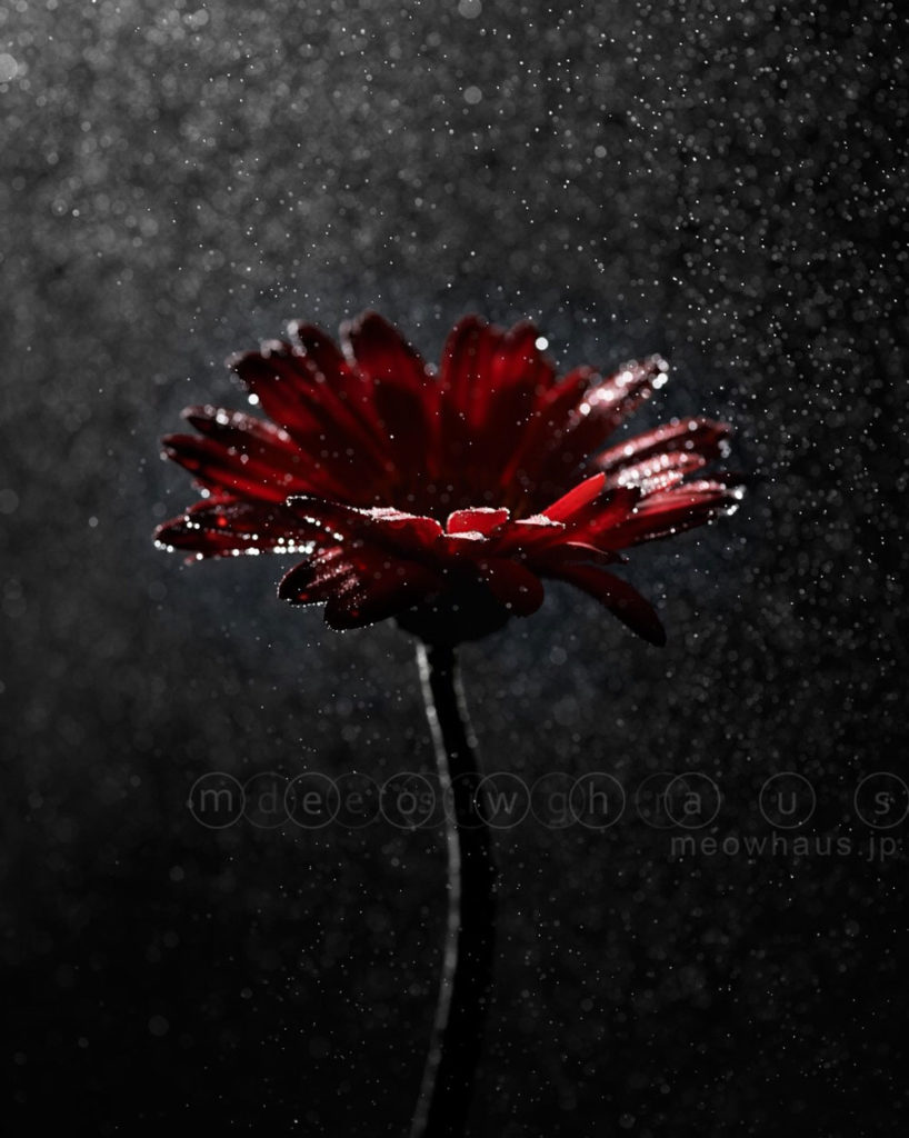 water - flower: photography by Ryutaro Kataoka